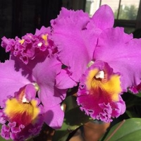 A Thousand Blooming Exotic Orchids at Rutgers University New Brunswick Campus  - FREE